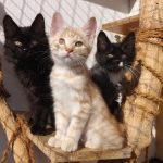 Adoptar un gato en otoño, el acierto para cualquier familia